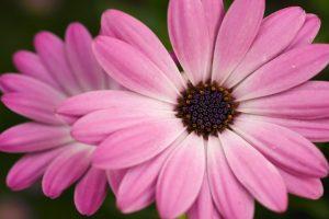 pink flower pics