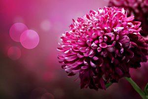 pretty flower backgrounds