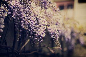 purple flower A4