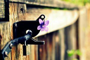 purple flower A7