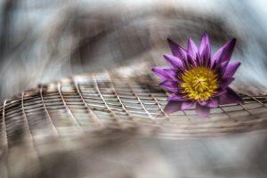 purple flower blur