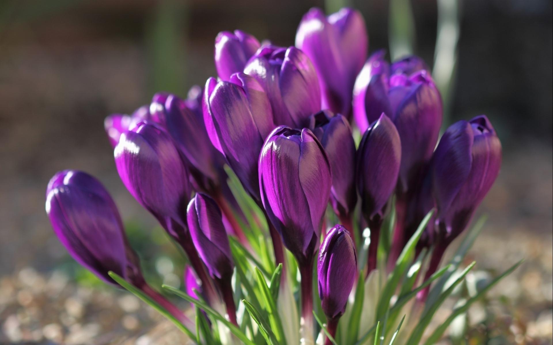 purple flowers A16 - HD Desktop Wallpapers | 4k HD
