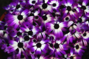 purple flowers A22