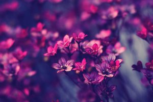 purple flowers picture