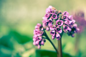 purple flowers spring