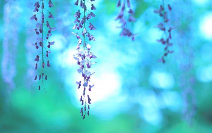 purple nature - HD Desktop Wallpapers  4k HD