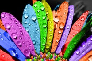 rainbow flowers wallpapers