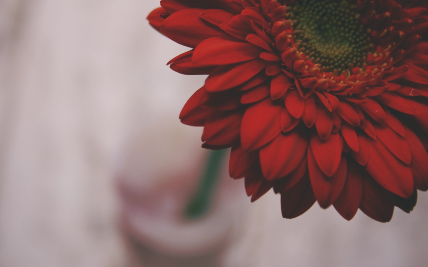 Red flower wallpaper hd