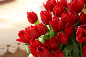 red flowers wallpaper A9