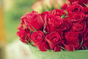 rose flower images background