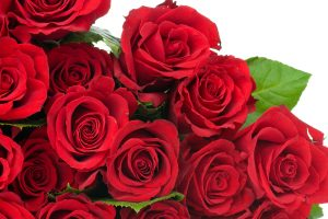 rose images free download