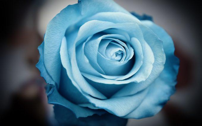 serene flower 4k desktop