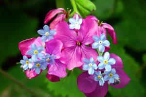 spring flower screensavers