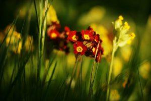 summer flowers wallpaper A4