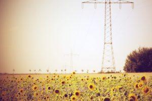 sunflower images for desktop