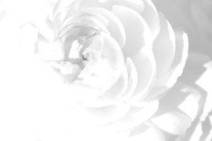white wallpaper A1