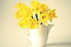 yellow flower wallpaper A14