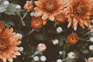 flower wallpaper hd 4k (10)
