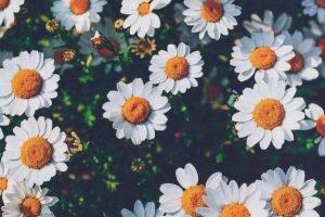 flower wallpaper hd 4k (11)