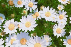 flower wallpaper hd 4k (14)