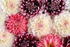 flower wallpaper hd 4k (18)