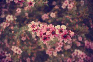 flower wallpaper hd 4k (2)