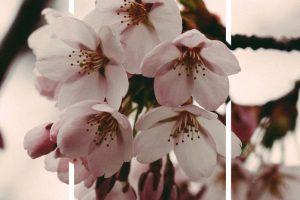 flower wallpaper hd 4k (22)