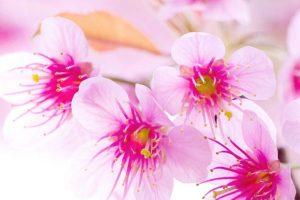 flower wallpaper hd 4k (24)