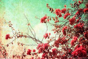 flower wallpaper hd 4k (28)