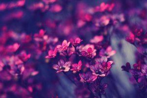 flower wallpaper hd 4k (31)