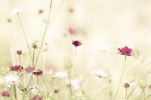 flower wallpaper hd 4k (32)