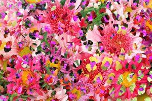 flower wallpaper hd 4k (34)