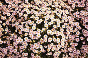 flower wallpaper hd 4k (4)