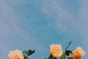 flower wallpaper hd 4k (55)