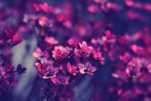 flower wallpaper hd 4k (57)