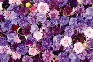 flower wallpaper hd 4k (60)