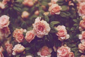 flower wallpaper hd 4k (64)
