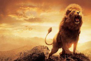 lion wallpapers hd 4k 13