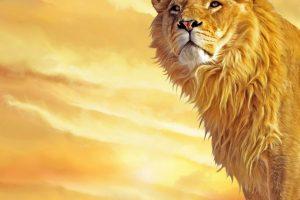 lion wallpapers hd 4k 37
