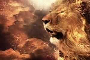 lion wallpapers hd 4k 4