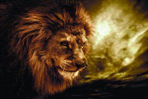 lion wallpapers hd 4k 44