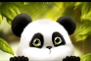 panda wallpaper hd 4k 33