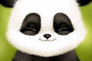 panda wallpaper hd 4k 46