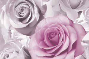 rose wallpapers hd 4k 32