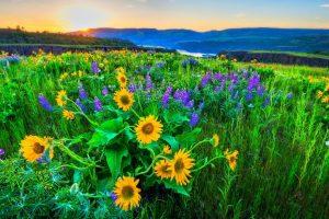 sun flower wallpaper hd 4k 28