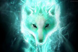 wolf wallpapers hd 4k 15