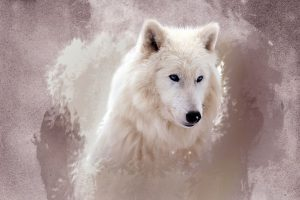 wolf wallpapers hd 4k 17