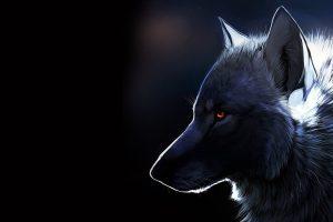 wolf wallpapers hd 4k 24