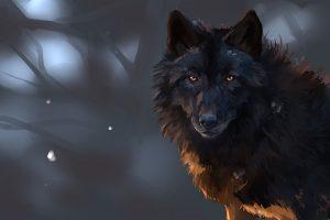 wolf wallpapers hd 4k 32