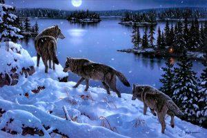 wolf wallpapers hd 4k 47